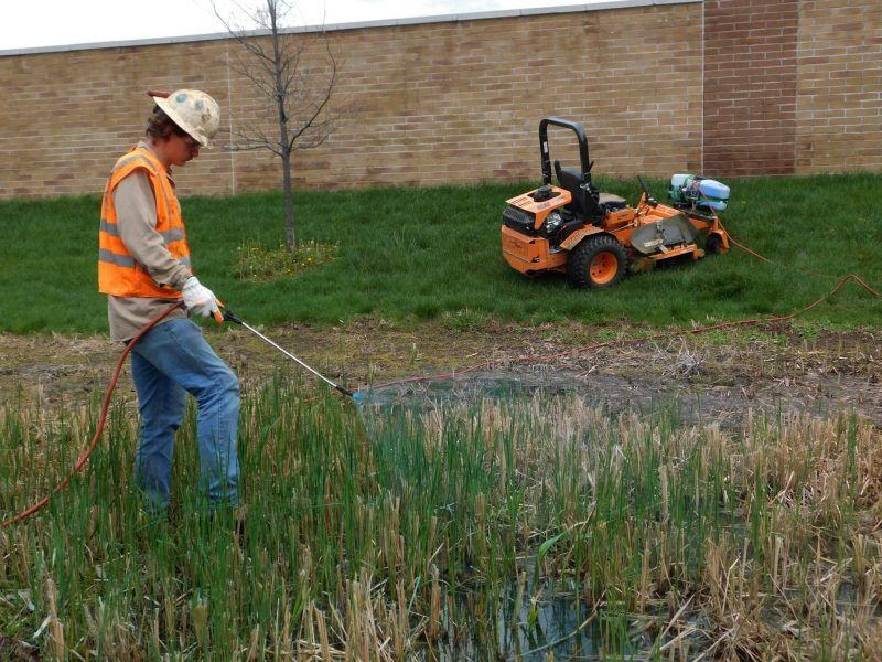 EWI Field Technician Josh Mann sprays a small grouping of cattails.